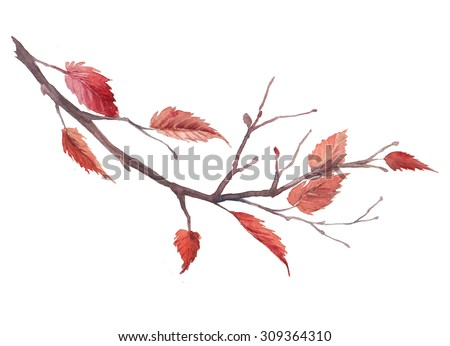Watercolor autumn tree branch. Hand drawn fall illustration with red leaves on branch isolated on white background. Natural raster art - stock photo