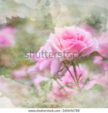watercolor background, garden roses - stock photo