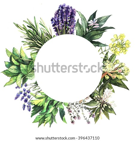 Watercolor background with aromatic herbs. Floral watercolor illustration. Illustration for greeting cards, invitations, and other printing projects. - stock photo