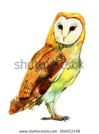 watercolor barn owl, hand painted illustration isolated on white background