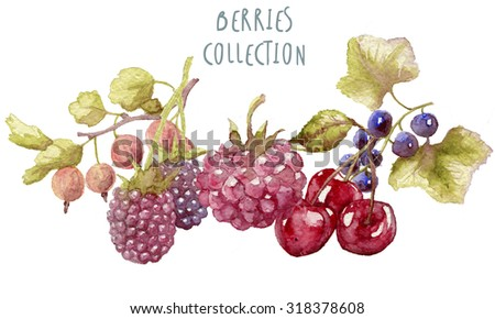 Watercolor berries hand drawn isolated on white - stock photo