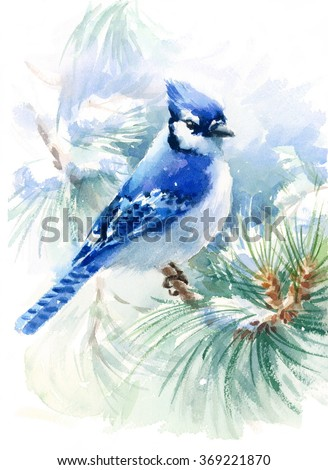 Watercolor Bird Blue Jay Winter Christmas Hand Painted Greeting Card Illustration - stock photo