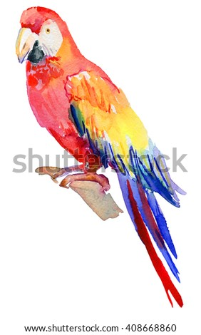Watercolor Bird. Colorful macaws isolated in white background, - stock photo
