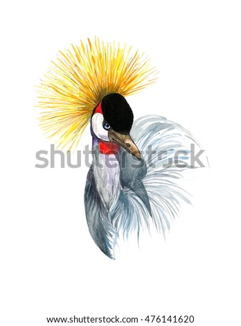 Watercolor Bird Crowned Crane Balearica Hand Painted Illustration