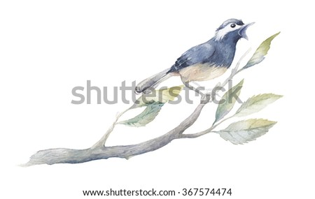 Watercolor bird illustration. Hand painted little bird on spring tree branch with green leaves isolated on white background. Botanical and wildlife illustration - stock photo