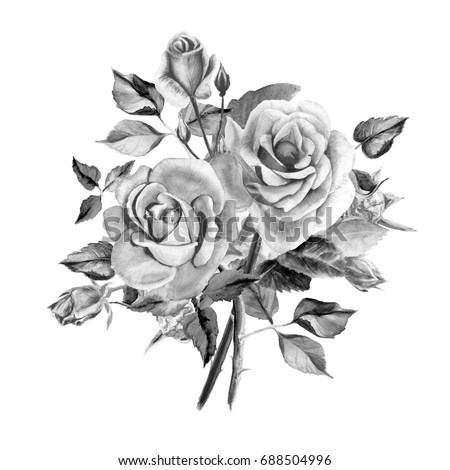 Watercolor black and white roses bouquet of roses rose bush beautiful flowers