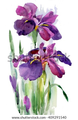 Watercolor blooming iris flowers illustration - stock photo