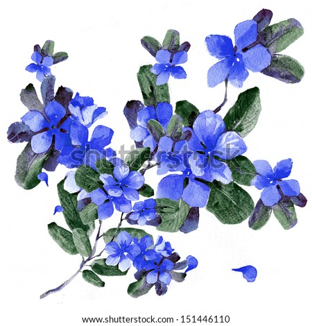 Watercolor blue flowers in a classical style on a white background - stock photo