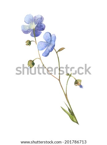 Watercolor blue little meadow flowers set