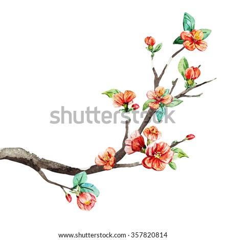 watercolor, branch cherry blossom, china, chinese new year, peach flowers
