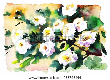 Watercolor branch of white roses, blooming apple tree. Beautiful spring illustration, hand drawing. - stock photo