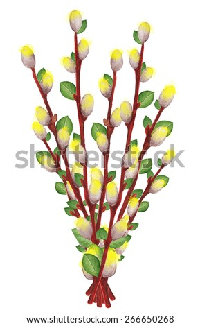 Watercolor branches blossom pussy willow tree, catkins, leafs closeup isolated on a white background. Hand painting on paper - stock photo