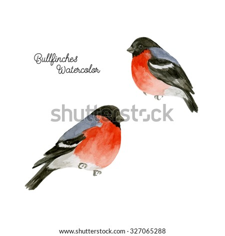 Watercolor bullfinches. Hand drawn illustration with birds on white background - stock photo