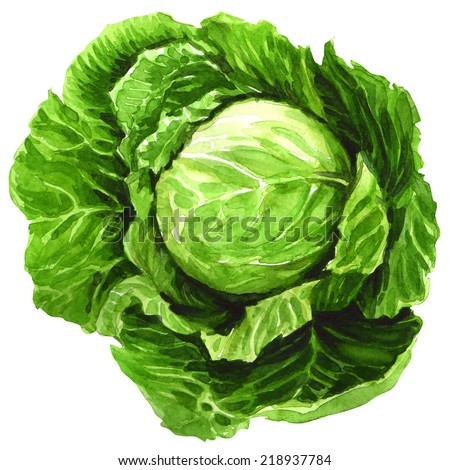 watercolor cabbage isolated on white - stock photo
