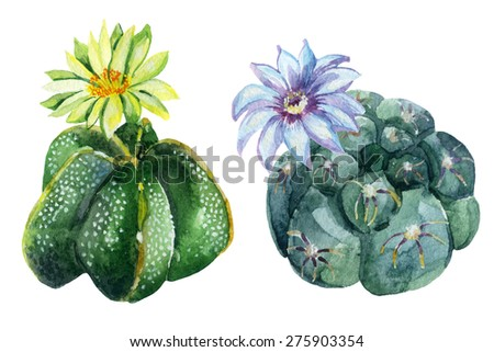 Watercolor cactus set isolated on white background. Hand painted illustration - stock photo