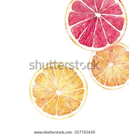 Watercolor citrus illustration. Hand painted orange and grapefruit slice background isolated on white background   - stock photo