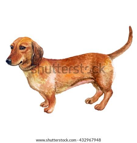 Watercolor Closeup Portrait French Bulldog Dog Stock ...