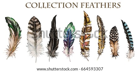 Different bird feathers - photo#35