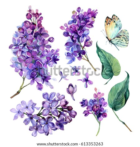 watercolor Collection of Purple Lilac Flowers, Leaves and Butterfly Isolated on White Background. Botanical Illustration in Vintage Style.