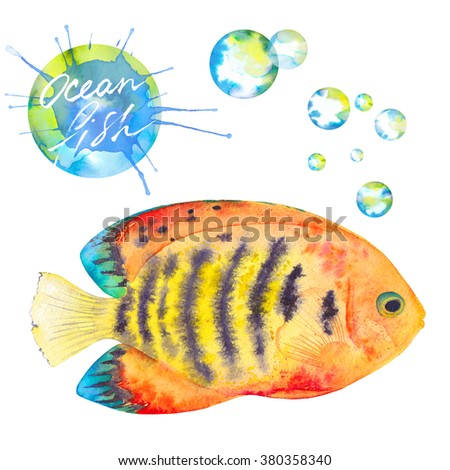 Watercolor colorful Flame Angel Fish. Hand drawn. Isolated on white background. Watercolor splash splatter. Watercolor bubbles - stock photo