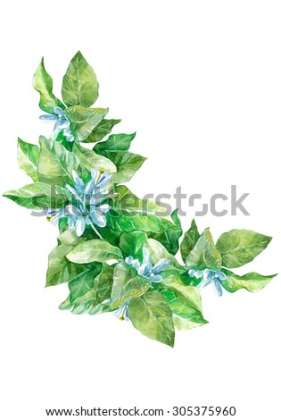 Watercolor colorful healthy herbal natural set with little blue flowers