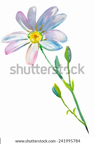 Watercolor Cosmos flower or Daisy flower. - stock photo