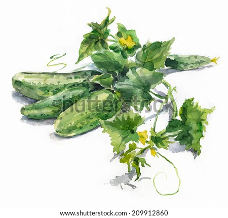 Watercolor cucumbers. Green branch with cucumbers. Watercolor painting.  - stock photo
