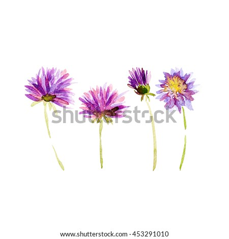 Watercolor Dahlia Flowers (hand painted) - stock photo