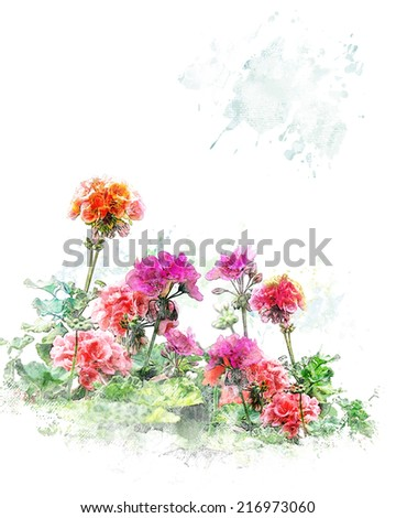 Watercolor Digital Painting Of Colorful Geranium Flowers - stock photo