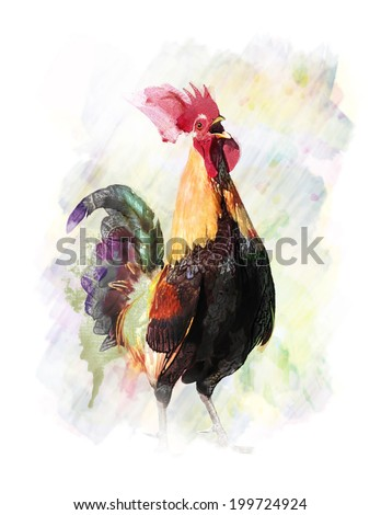 Watercolor Digital Painting Of Colorful Rooster - stock photo