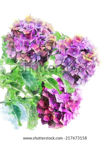 Watercolor Digital Painting Of Hydrangea Flowers - stock photo