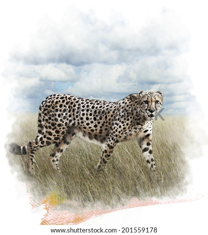 Watercolor Digital Painting Of  Walking Cheetah - stock photo