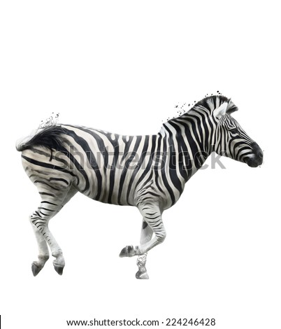 Watercolor Digital Painting Of Zebra - stock photo