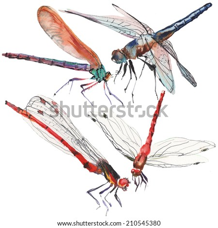 Watercolor dragonflies illustration on white background - stock photo