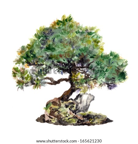 Watercolor drawing isolated pine tree with rock - stock photo