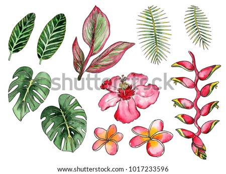 Watercolor drawing tropical plants flowers stock illustration watercolor drawing of tropical plants and flowers mightylinksfo