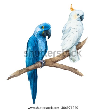 watercolor drawing White isolated parrot cockatoo, blue macaw - stock photo