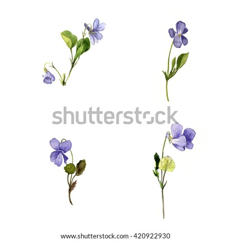 Watercolor Drawing Wild Blue Flowers Plants Of Violets Painted Meadow Herbs Botanical Illustration