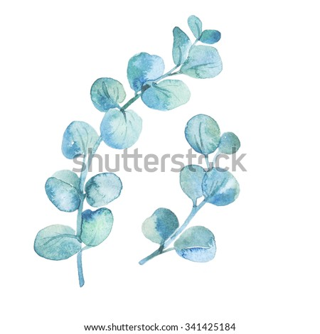 Watercolor eucalyptus leaves and branches. Hand painted watercolor illustration with eucalyptus branch  - stock photo