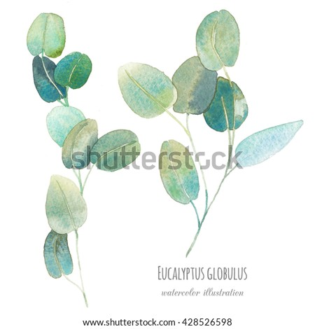 Watercolor eucalyptus with round leaves. Hand painted green branches with leaves isolated on white background. Botanical elements for floral design - stock photo