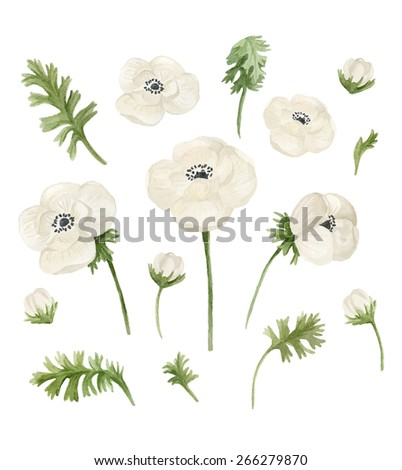 Watercolor floral elements set. Hand drawn illustration isolated on white background. Can be used in greeting cards, wedding invitations, birthday, package design or fabric - stock photo