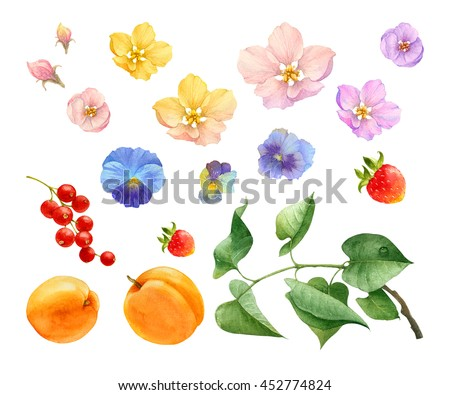 watercolor flowers fruit