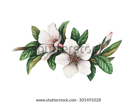 Watercolor flowers illustration - stock photo