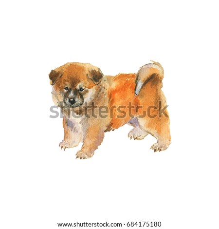 Watercolor fluffy akita inu dog portrait. Hand drawn cute puppy. Painting isolated pets illustration on white background
