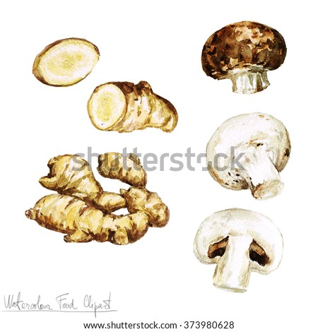 Watercolor Food Clipart - Ginger and Mushroom - stock photo