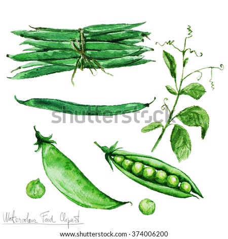 Watercolor Food Clipart - Green Beans and Peas - stock photo