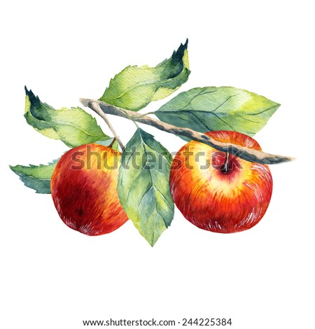 watercolor fruit apple branch on white background - stock photo