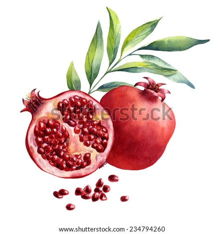 watercolor fruit pomegranate on white background   - stock photo