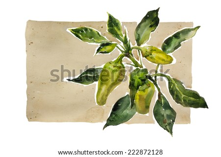 Watercolor garden vignette green and yellow paprika twig with leaves, original illustration on paper - stock photo