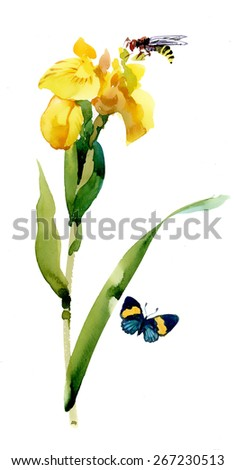 Watercolor garden yellow flowers with butterfly and bee isolated on white background